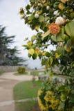 Park near ruins of castle of Vigo, Vigo, Galicia, Spain royalty free stock photo