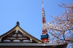 Tokyo Japan Park with the Tokyo Tower in the background. Park near the in Tokyo Japan with tree lining the photo with Cherry Blossoms.  In the spring time Stock Image