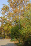 Park in November Stock Foto's
