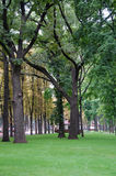 The Park. The Oaks in Park at cloudy summer Midday Royalty Free Stock Photo
