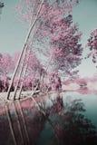 Park of Ois da ribeira Royalty Free Stock Photography