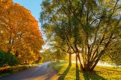 Park op een zonnige ochtend royalty-vrije stock foto