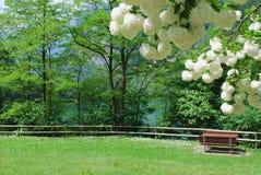 In park op kust van bergmeer. Royalty-vrije Stock Foto's