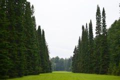 Park in Oranienbaum. Stock Photos
