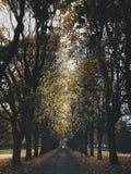 Park in Oslo Stock Afbeelding