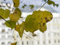 A park in Oslo, Norway - the autumnal leaves. Stock Photos