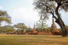 Park oude tempel in Ayutthaya, Thailand Stock Afbeelding