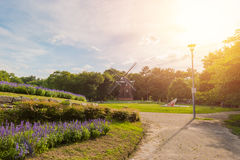 Park outdoor landscape with green grass. Stock Photos