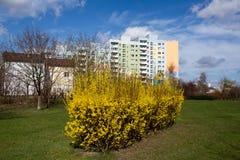 Park outdor in Gdansk Zaspa. Stock Photography