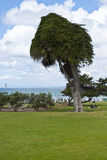 Park at the Pacific Ocean Coast Stock Photography