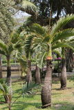Park ,. Palm park is a place of rest and exercise Stock Photography