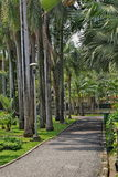 Park ,. Palm park is a place of rest and exercise Stock Image