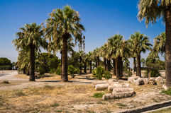 Park with palm trees Stock Image