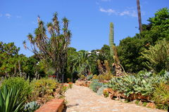 Park with palm trees and cacti Stock Photography