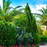 park with palm trees and evergreen plants Stock Photos