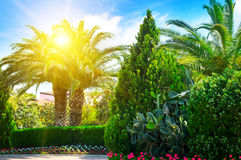 Park with palm trees and evergreen plants Royalty Free Stock Photos