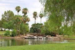 Park with Palm Trees and Lake. Green park with palmtrees and lake Royalty Free Stock Images
