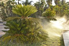 Morning sprinklers watering palm trees in Malaga Spain royalty free stock image
