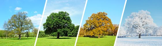 Park-Panorama - Four Seasons stockbilder