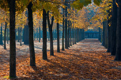 Park in paris Royalty Free Stock Images