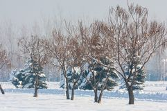 Park. First prizident, lands in the fog in winter. Kazakhstan. Almaty Stock Photography