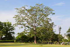 Park. S in central eastern province of Thailand Stock Photography