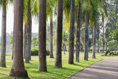 Park. S in central eastern province of Thailand Royalty Free Stock Image