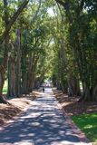 Park Path. Path through tall trees in park called Fitzroy Gardens in Melbourne, Australia Stock Photos