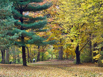Park Path Royalty Free Stock Photography