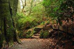 Park path. Little path with stairs and trees royalty free stock image
