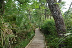 Park Path. A walking path lined with trees and bushes in a park royalty free stock photography