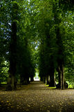Park Path. A beautiful view of a path in the beautiful park in the famous Danish castle called Egeskov Slot Stock Photography