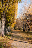 Park path in autumn Royalty Free Stock Images
