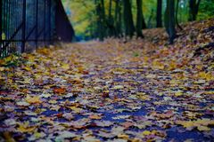 Park path and autumn leaves Royalty Free Stock Images
