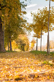 Park path covered in fallen leaves Royalty Free Stock Images