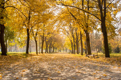 Park path covered in fallen leaves Stock Image
