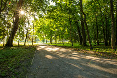 Park and the path illuminated by sunbeams  of the rising sun Royalty Free Stock Images