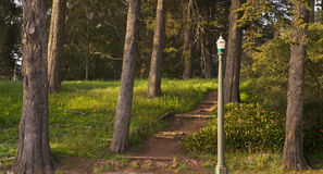 Park Path and Lamp, Sunset Royalty Free Stock Photo