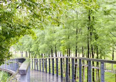 Park path after the rain. Green park path after the rain Royalty Free Stock Images