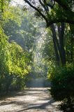 Park Path in Sanny day. Park Path With Trees in Sanny day stock photography