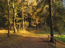 Park path turns in the sunlit yellow tree royalty free stock photo