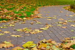 Park paths and green grass around covered with fallen leaves Royalty Free Stock Images