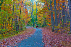 A park pathway in the autumn. Stock Images
