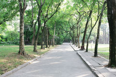 Park pathway. Park/campus pathway in the chinese city Royalty Free Stock Photography