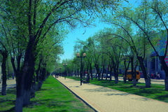 Park paved path, benches, street lamps in spring day Royalty Free Stock Photography