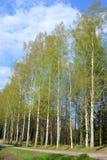 Park in Pavlovsk Stockbilder