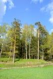 Park in Pavlovsk Stockfoto