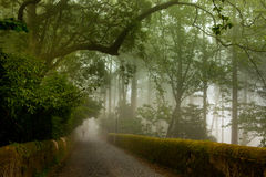 Park of the Pena Palace, the fabulous alley in foggy weather Royalty Free Stock Photography