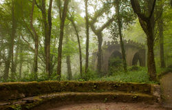 Park of the Pena Palace, the fabulous alley in foggy weather Royalty Free Stock Photos