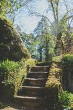 Park of Pena Palace in Sintra, Portugal. royalty free stock images